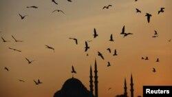 Стамбул 29 ноября 2012