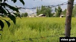Колючая проволока на узбекско-кыргызской границе.