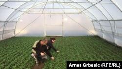 Poljoprivreda u BiH