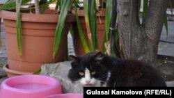 Уличная кошка. Иллюстративное фото.