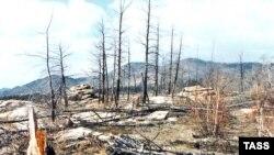 Право собственности на лес сохранится за федеральным центром, а все полномочия по распоряжению лесами передадут регионам