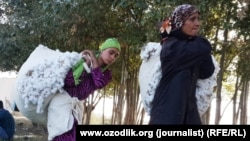 Сборщики хлопка в Гузалкентском районе Самаркандской области, Узбекистан