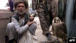 An Afghan man with a falcon at a refugee camp near Radja Bahoudine.