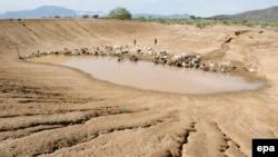 Пастухи пригнали стадо овец и коз на водопой на почти высохший водоем в Кении. 13 декабря 2009 года.