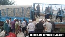 Сборщики хлопка в Узбекистане