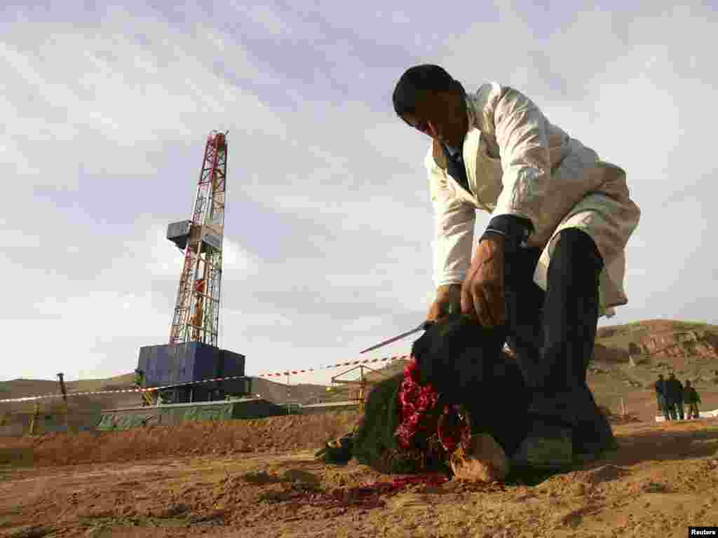 A man slaughters a sheep in front of a drilling tower near Dushanbe, Tajikistan. Photo by Nozim Kalandarov for Reuters