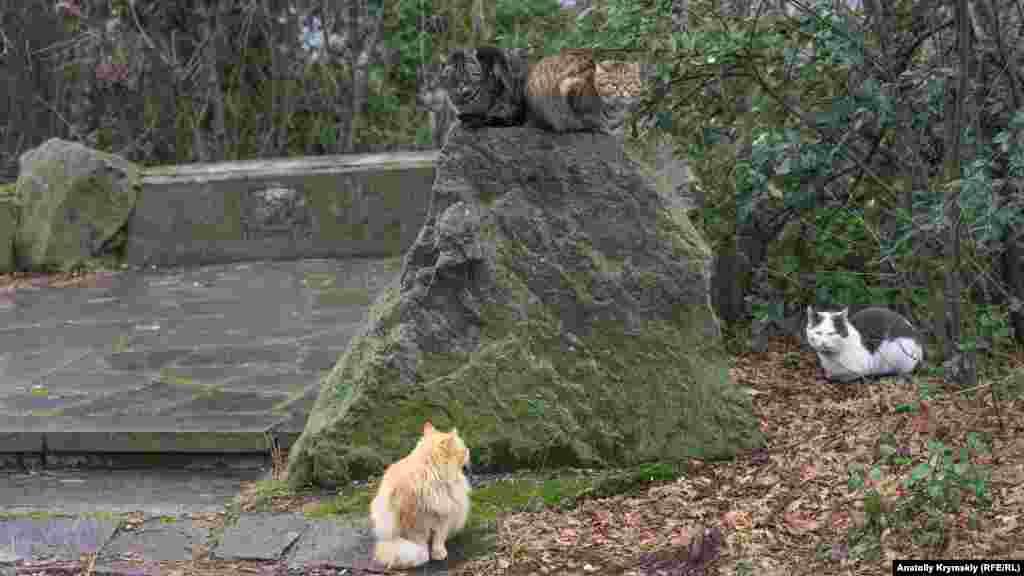Паркові коти, напевно, відчувають наближення весни