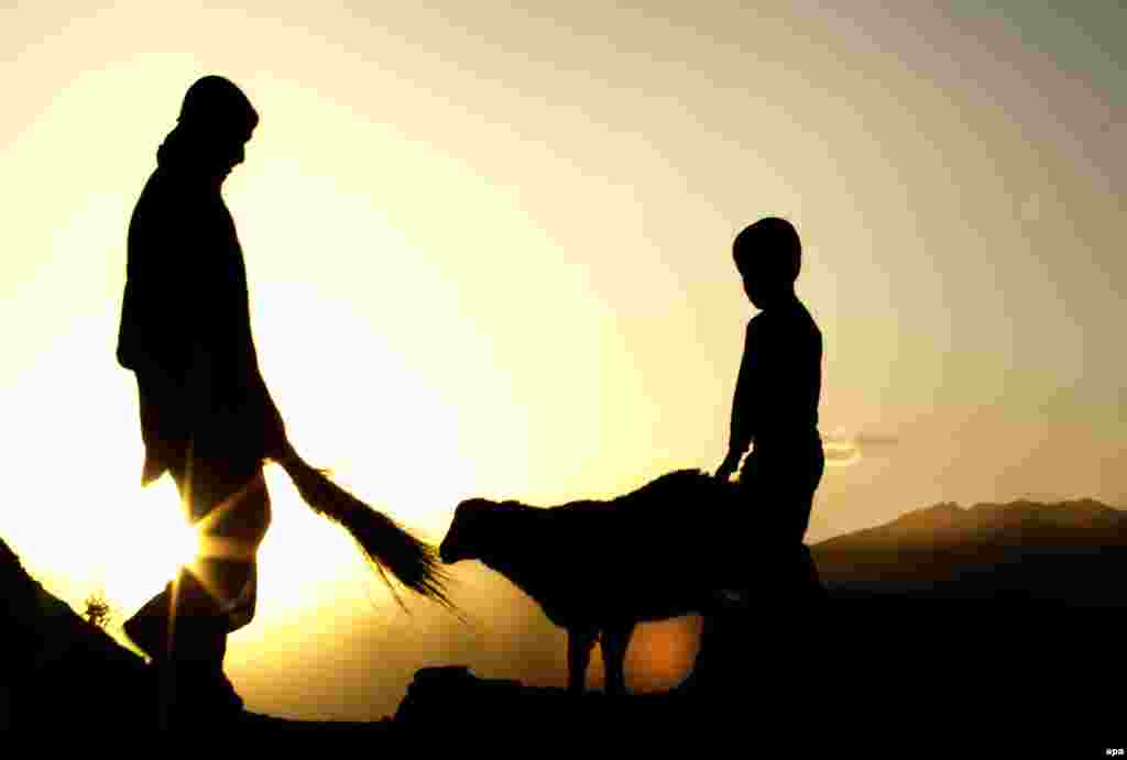 Afghan shepherds are silhouatted against the dying sun while feeding a goat on the outskirts of Kabul. (epa/Hedayatullah Amid)