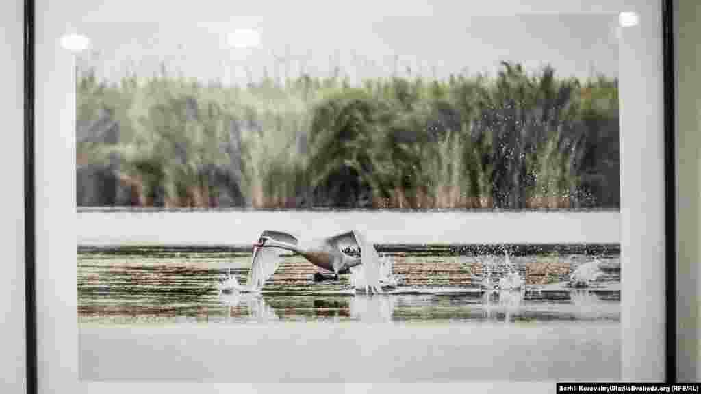 Світлина Тетяни Барибіни із серії «Птахи водойм»