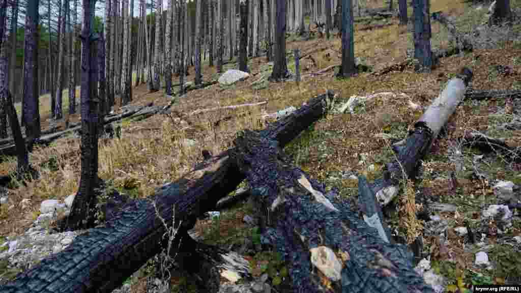 В некоторых местах заповедник до сих пор напоминает выжженный лесоповал