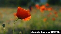 Наразі вирощування нарковмісних рослин на території Росії заборонене
