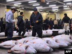 Аукцион в Японии по продаже Южного синеперого тунца, чье мясо считается самым вкусным. Численность вида сократилась за 100 лет на 99 процентов
