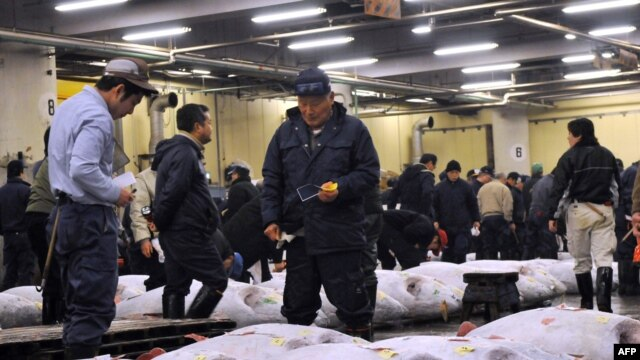Fishmongers inspect large bluefin tuna before auction at Tokyo's Tsukiji fish market. Mercury levels abound in top predators like tuna after they work their way up the food chain.