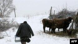 К пожилым избирателям в грузинских селах урна для голосования приходит сама