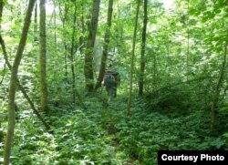 Асьвейскі парк нібы джунглі