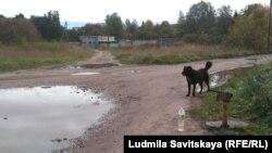 Сельская водная инфраструктура