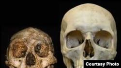 Homo floresiensis и Homo Sapiens. Разница в размерах между «хоббитом» с острова Флорес и большинством современных людей разительно велика.