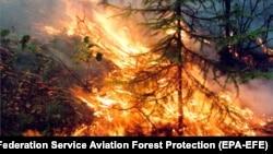 Лесные пожары, Красноярский край. 1 августа 2019 года