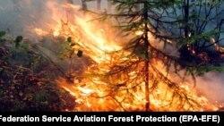 Лесной пожар в Сибири, 1 августа 2019 года