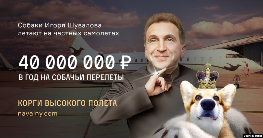 ФБК уличил Шувалова в транспортировке собак частным лайнером