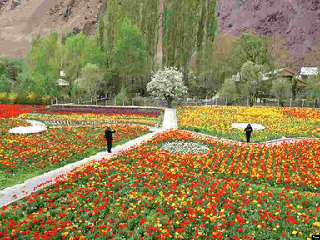 باغ گل لاله، چالوس