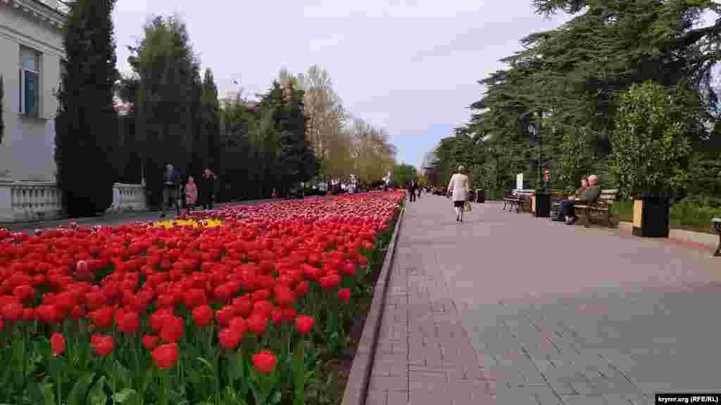 Приморский бульвар весь в цвету