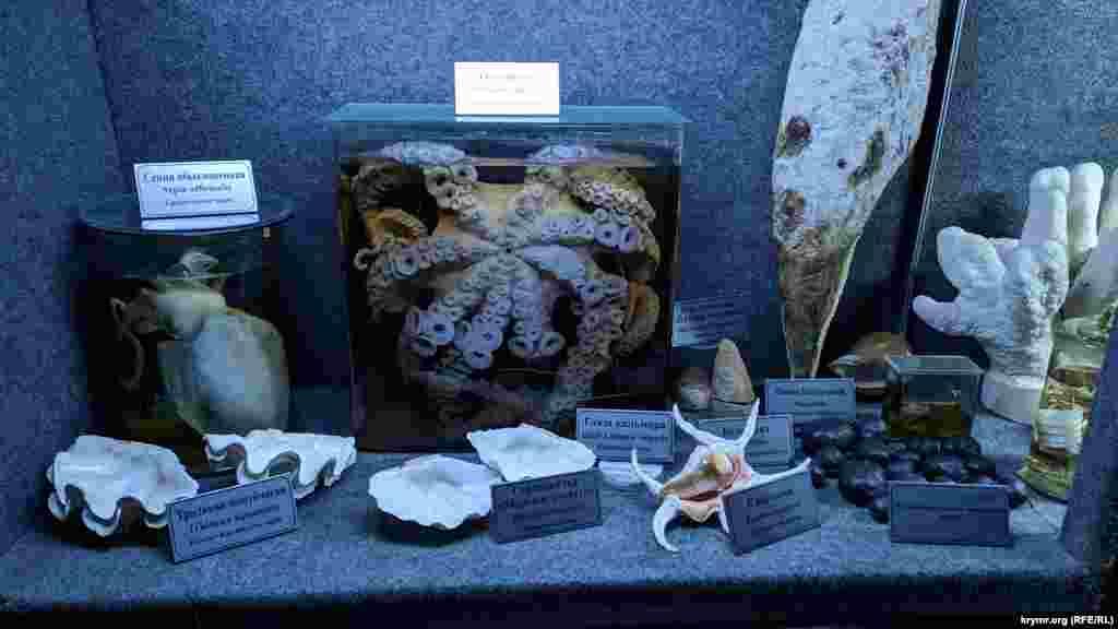 Коллекция раковин моллюсков из тропических морей