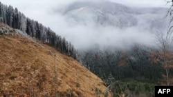 Tăieri ilegale de păduri