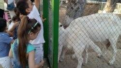 """İradə İbrahimova: """"Yeni Zooloji Parkın layihəsi tam hazırdır və aidiyyatı qurumlara təhvil verilib"""""""