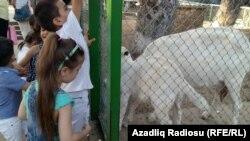 Bakı zooparkından görüntülər