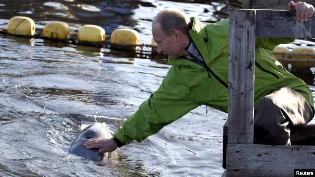Vladimir Putin strokes a beluga whale as he visits Tchkal Island in the Sea of Okhotsk in 2009.