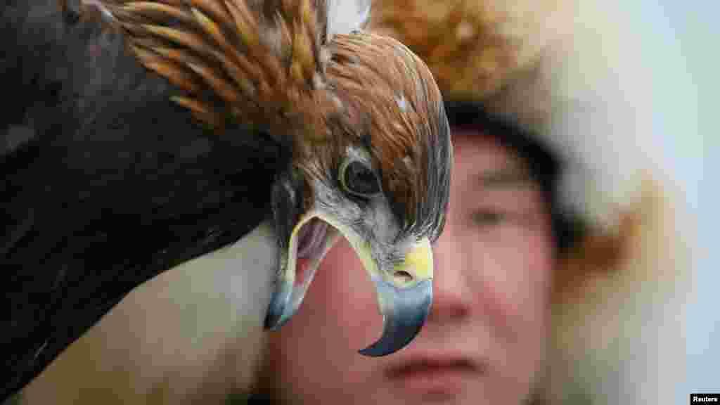 Один из беркутчи смотрит на свою птицу.