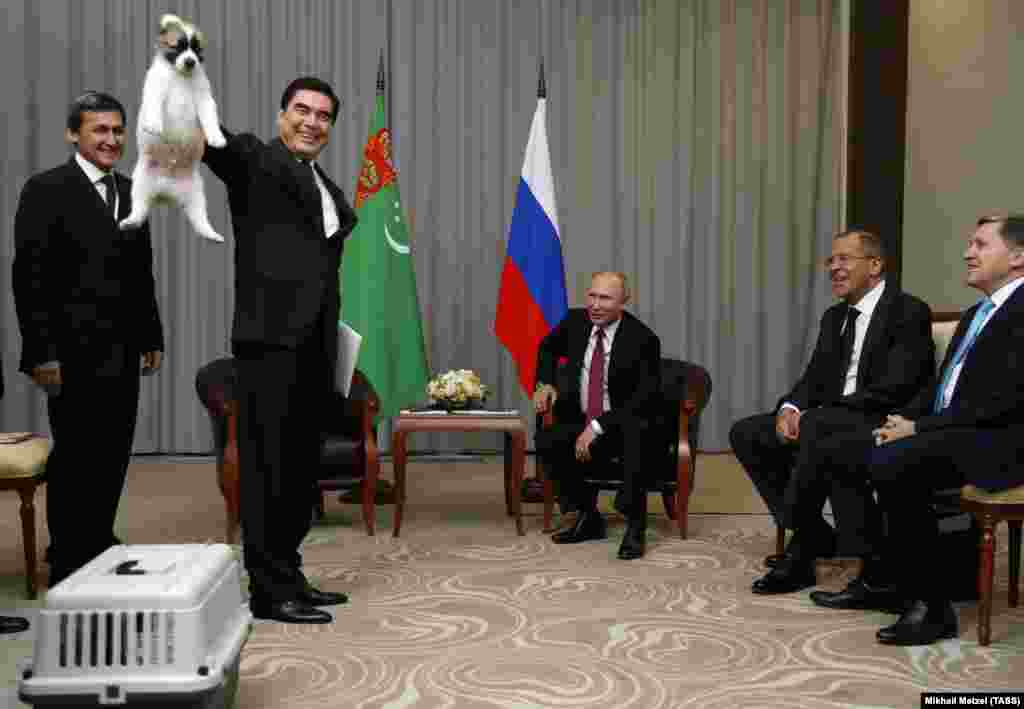 RUSSIA -- Turkmen President Gurbanguly Berdymukhamedov demonstrates a Turkmen shepherd dog, locally known as Alabai, before presenting it to his Russian counterpart Vladimir Putin during a meeting in Sochi, October 11, 2017