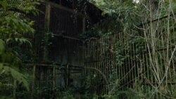 Сокровище Тарзана: жизнь ученых и обезьян в Абхазии