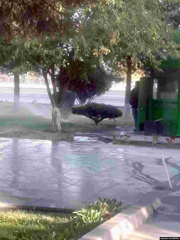 Agaçlar suwarylýar. Aşgabat, 2020