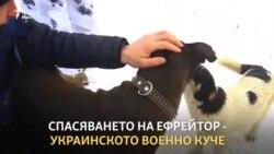 Спасяването на Ефрейтор - кучето ветеран от Донбас