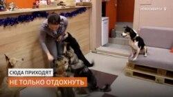 Первое в России кафе откуда можно забрать собаку