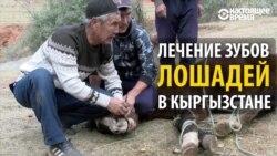 Как лечат зубы лошадям в Кыргызстане
