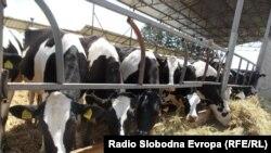 Macedonia - Livestock farm in Bitola.