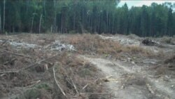 Химки: защита леса круглосуточно