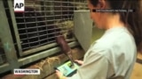 'Apps for Apes' Program Offers Orangutans iPads
