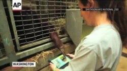 Program 'Aplikacije za majmune' nudi iPad za orangutane