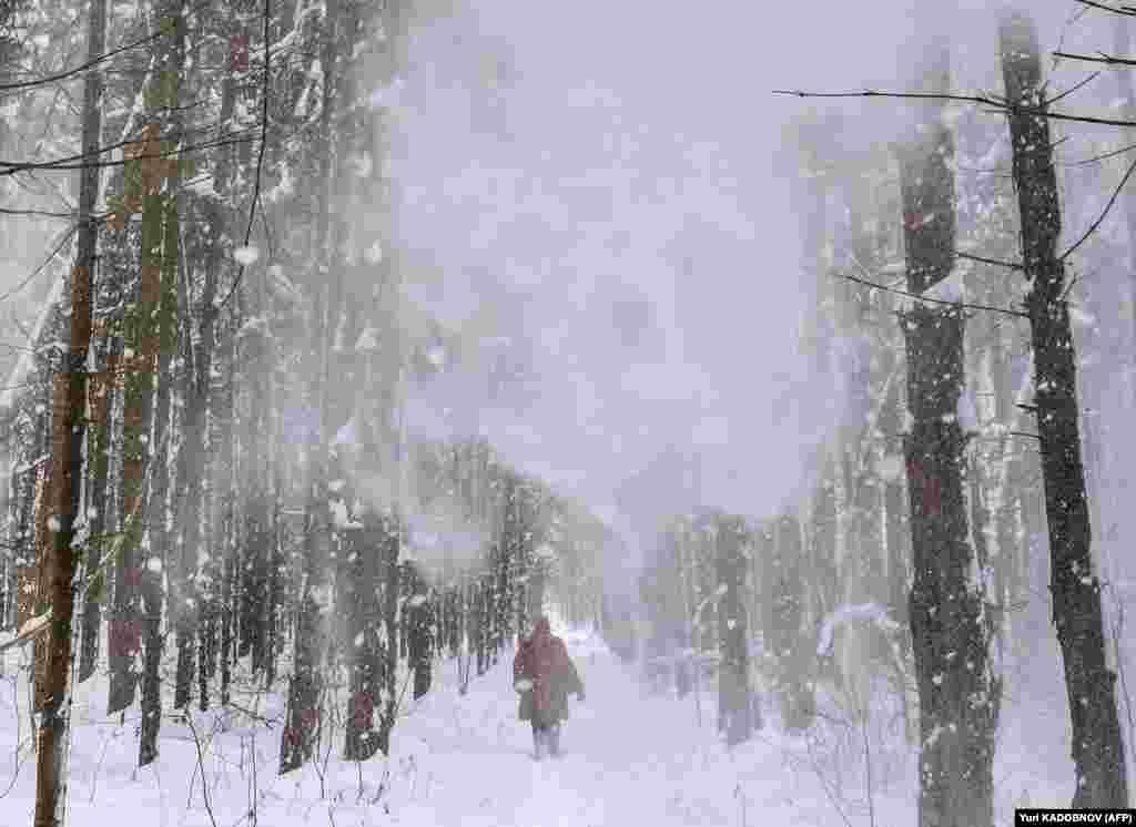 Një grua ec përgjatë një pylli me borë, afër fshatit Lyubuchany jashtë Moskës.