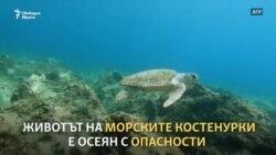 Опасният живот на морските костенурки