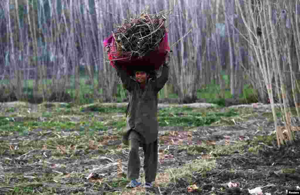 A child returns home after collecting firewood in the village of Jala Bela outside Peshawar, Pakistan. (Reuters/Khuram Parvez)