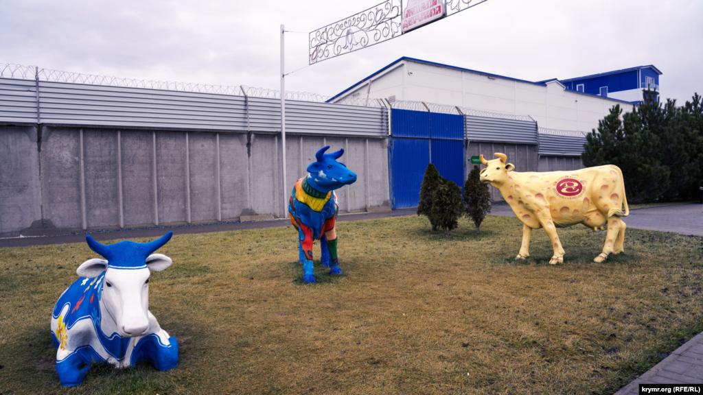 Бутафорські корови на галявині перед парканом місцевого заводу молочної продукції «Новатор»