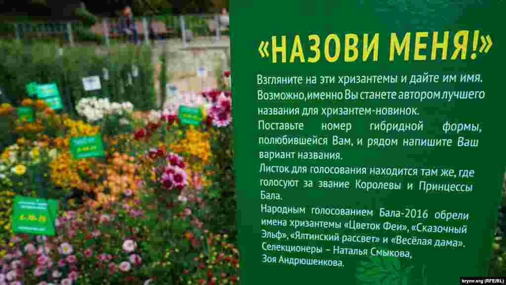 Гостям пропонують вигадати назви нових гібридних форм хризантем