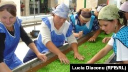 Întreprindere de prelucrare a legumelor, Edineț