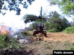 Работнікі лясной гаспадаркі ачышчаюць просеку ад зсечаных маладых дрэваў і кустоўя