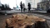"""Бир кезде """"жашыл шаар"""" атка конгон Бишкекте акыркы 25 жыл ичинде бак-дарак кескин азайып кетти."""